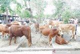 Masyarakat diimbau beli hewan kurban yang disertai SKKH