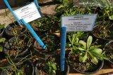 PT Vale bina warga kembangkan 130 tanaman herbal