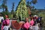 Petani Gunung Merbabu gelar tradisi