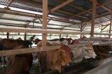 Ada 3.351 hewan qurban di Inhu