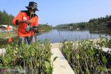 Turtle conservation area was planted with 5,000 mangrove seedlings