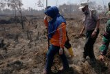 Bupati Muarojambi Masnah (kiri), Kepala Badan Penanggulangan Bencana Daerah (BPBD) Muhammad Zakir (kanan), dan petugas meninjau lokasi bekas lahan gambut yang terbakar di Kumpeh Ulu, Muarojambi, Jambi, Sabtu (3/8/2019). Kumpeh Ulu, Muarojambi yang berada di lahan gambut dengan kedalaman antara 1-3 meter merupakan areal terparah terkena dampak kebakaran di provinsi itu dengan luasan terbakar mencapai 50 hektare lebih dalam sepekan terakhir dan menjadi prioritas pemadaman darat dan dukungan pemadaman udara dari helikopter bantuan Badan Nasional Penanggulangan Bencana (BNPB). ANTARA FOTO/Usman Muhammad/ws/hp.