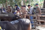 2.458 hewan kurban di Kota Makassar sudah diperiksa kelayakannya