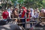 DP2 Makassar kerahkan 166 tenaga kesehatan periksa hewan qurban