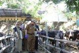 Pj Wali Kota Makassar tinjau pemeriksaan hewan kurban