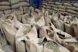 Lampung ekspor kopi 250 ribu ton