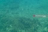 Balitbang KLHK prihatin kondisi terumbu karang Tambelan