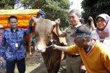 Kementan perkirakan kebutuhan domba dan kambing untuk kurban 25 juta ekor