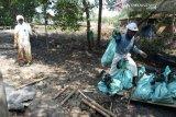 300 ribu bakau terancam mati akibat tumpahan minyak