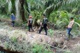 Harimau Sumatera liar lompat pagar setinggi dua meter keluar area PT Chevron