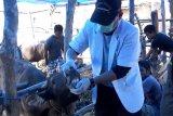 Pemkot Parepare periksa kesehatan hewan kurban