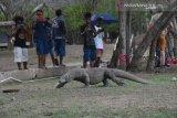 Taman Nasional Komodo diawasi dengan teknologi digital