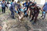 Polres Bima Kota memusnahkan barang bukti perdagangan satwa lindung