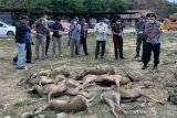 Polres Bima tetapkan tersangka kasus perdagangan rusa