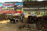 Peluang bisnis pakan ternak di Jakarta