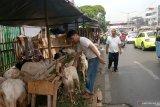 Trotoar dipenuhi pedagang hewan, pejalan kaki kritisi pemkot