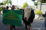 Presiden Jokowi menyumbang dua ekor sapi kurban untuk DIY