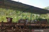 Panitia kurban diminta kemas daging kurban dengan bahan ramah lingkungan