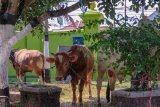 Dispertan Yogyakarta menyosialisasikan penyimpanan daging kurban
