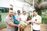 Pertamina Dumai serahkan 24 sapi donasi karyawan dan perusahaan