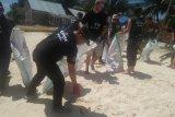 Bupati Konawe Utara Bersama LSM Perancis Aksi Bersih Sampah di Labengki