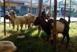 Tim gabungan akan diturunkan saat pemotongan hewan kurban