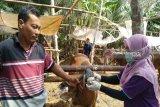 Panitia kurban di Kulon Progo diimbau tak mencuci jeroan di sungai
