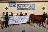 BPJS Ketenagakerjaan serahkan hewan kurban ke masjid di Demak