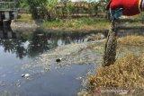 PENCEMARAN SUNGAI CIDURIAN. Warga menunjukkan bangkai ikan yang mati di aliran Sungai Cidurian yang telah berubah warna menjadi hitam dan mengeluarkan bau menyengat akibat tercemar limbah di Pontang, Serang, Banten, Sabtu (10/8/2019). Warga setempat sudah berulang kali mengadukan penemaran di Sungai Cidurian karena terganggu bau busuk namun tidak ada tanggapan serius dari Pemda setempat untuk menangani masalah tersebut. ANTARA FOTO/Asep Fathulrahman/ANTARA FOTO/ASEP FATHULRAHMAN (ANTARA FOTO/ASEP FATHULRAHMAN)