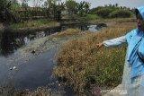 PENCEMARAN SUNGAI CIDURIAN. Warga menunjukkan aliran Sungai Cidurian yang berubah warna menjadi hitam dan mengeluarkan bau menyengat akibat tercemar limbah di Pontang, Serang, Banten, Sabtu (10/8/2019). Warga setempat sudah berulang kali mengadukan penemaran di Sungai Cidurian karena terganggu bau busuk namun tidak ada tanggapan serius dari Pemda setempat untuk menangani masalah tersebut. ANTARA FOTO/Asep Fathulrahman/ANTARA FOTO/ASEP FATHULRAHMAN (ANTARA FOTO/ASEP FATHULRAHMAN)