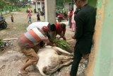 IJTI Sumbar Berbagi Daging Kurban Kepada Wartawan dan Warga