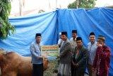 Gubernur Lampung Arinal Djunaidi serahkan sapi kurban dari Presiden seberat 1 ton