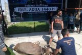 Warga Binaan Rutan Padang nikmati Lezatnya  Daging Kurban