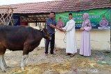 Polres Barito Timur bagikan 750 bungkus daging hewan kurban