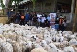 ACT DIY sembelih 95 ekor hewan kurban  di Kulon Progo