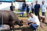 Pertamina Papua-Maluku serahkan hewan kurban ke masjid dan panti asuhan