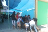 PHBI Jayawijaya sembelih 102 hewan kurban