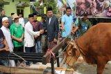 Bupati  serahkan sapi berbobot 500 kg untuk kurban