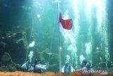 Pengalaman Aaliyah Massaid kibarkan bendera dalam air