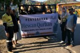 AMNT dan Yayasan Muslim Batu Hijau sumbang 34 ekor sapi
