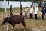 Sisihkan gaji, pegawai Dinsos Kalteng laksanakan ibadah kurban