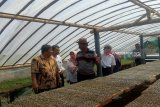 Produksi cabai lahan seluas 600 hektare di Kulon Progo capai 150 ton/hari