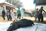 BKKBN Kalteng bagikan 1.200 paket daging kurban