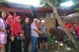 Pengurus PDIP membagikan daging hewan kurban ke warga Mataram