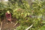 Agam received assistance of 24,000 coffee seeds