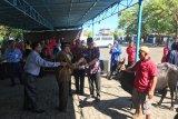 PT Bank SulutGo berkurban belasan ekor sapi