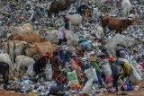 Sejumlah pemulung memungut sampah plastik di Tempat Pembuangan Akhir (TPA) sampah Kampung Ciangir, Kota Tasikmalaya, Jawa Barat, Selasa (12/8/2019). Berdasarkan Kementerian Lingkungan Hidup dan Kehutanan (KLHK) Indonesia masuk dalam peringkat kedua di dunia sebagai penghasil sampah plastik setelah Tiongkok, dengan total jumlah sampah pada 2019 mencapai akan 68 juta ton, dan sampah plastik diperkirakan mencapai 9,52 juta ton atau 14 persen dari total sampah yang ada. ANTARA FOTO/Adeng Bustomi/nym.