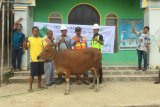Dhesa Group berbagi hewan kurban bersama masyarakat