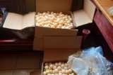 Polisi sita seribuan telur penyu di Pelabuhan Sintete Sambas