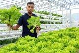 Oka Wahyudi, petani hidroponik beromzet miliaran rupiah